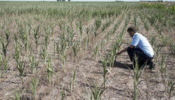 Advierten que el partido bonaerense de 25 de Mayo vive la peor sequía en 100 años