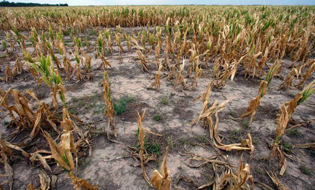 Peor sequía en China en 60 años hace peligrar cosecha