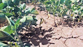 Brasil: la peor sequía en 80 años golpea al cultivo de soja