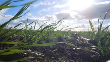 Sequía afecta la zona productora de EE.UU.