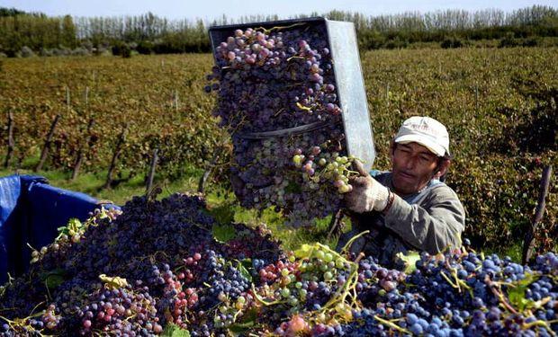 Cortocircuito entre Mendoza y San Juan por el convenio vitivinícola.