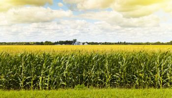 China realizó la mayor compra de maíz a Estados Unidos en 5 años