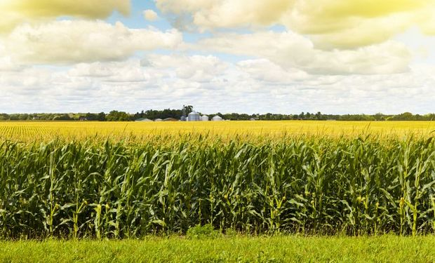 Sube el maíz en Chicago por compras de China.