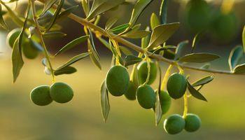 Argentina en importante feria gourmet: 18 empresas olivícolas viajaron a Nueva York