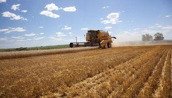 """Según Solmi, la siembra récord de trigo y cebada es por las """"políticas activas"""" del Gobierno"""