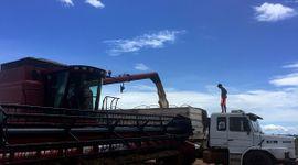 Soja: la siembra en Brasil crecerá por decimoquinta campaña consecutiva