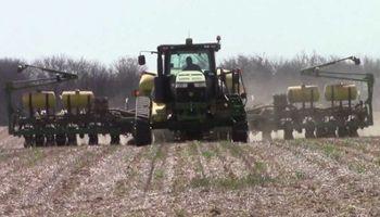 Siembra de maíz cubre el 91% de la superficie en Estados Unidos