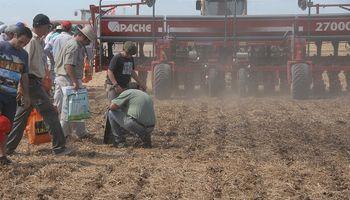 """Cepo al dólar: podría caer el área de trigo y se deja """"fuera de juego"""" al maíz y la soja"""