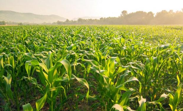 Para 6 cultivos y en plena pandemia, productores invirtieron US$ 10.000 millones: cómo se financian