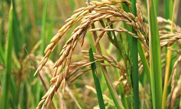 Los lotes ya sembrados posiblemente no prosperarán porque la semilla estará saturada de agua.
