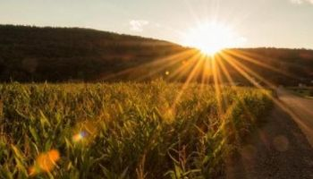 Foto actual muestra al maíz con las mejores proyecciones
