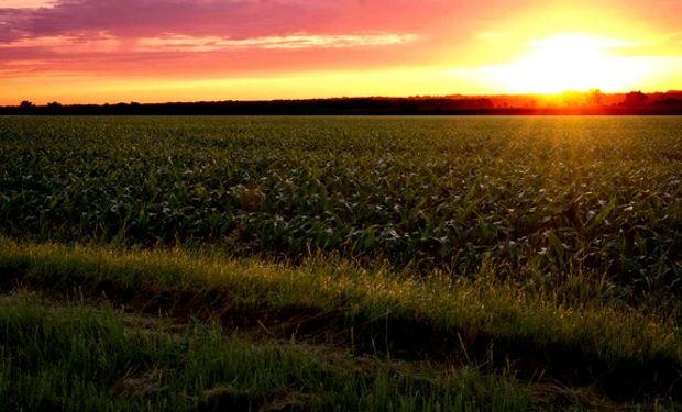 Un anuncio de baja de retenciones podría lograr revertir la merma en la intención de superficie de siembra del forrajero que hoy se proyecta.