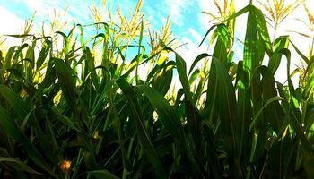 Fuerte impacto para sembrar en campos alquilados