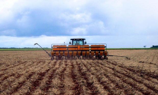 A días de comenzar el nuevo ciclo son pocos los factores que traccionan la siembra de la oleaginosa.