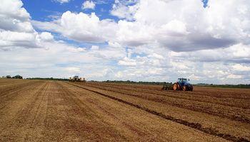 La intención de siembra de soja aumentó un 5% en el centro norte de Santa Fe