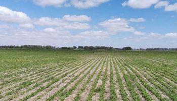 La siembra de soja y maíz alcanzó a la mitad de la superficie estimada