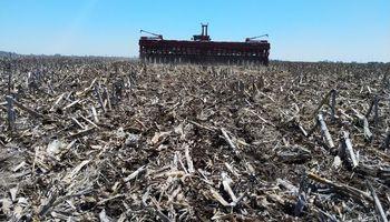 Avanza la soja, el maíz y el girasol: cómo sigue la siembra tras las recientes lluvias