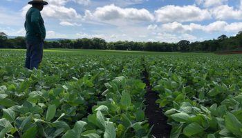 Se recupera la siembra de soja en Brasil y la superficie implantada ya supera a la del año pasado