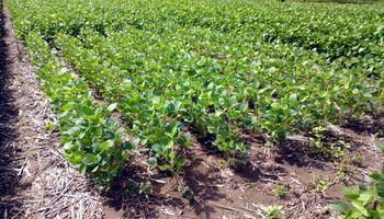 Productores ya vendieron 15 millones de toneladas de soja y maíz de la nueva campaña