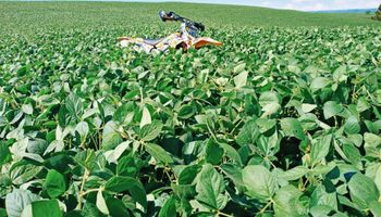 Brasil: la siembra de soja entra en la recta final y la estimación de cosecha se mantiene en valores récord