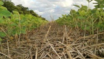 Complicaciones para la siembra de soja de segunda en Santa Fe