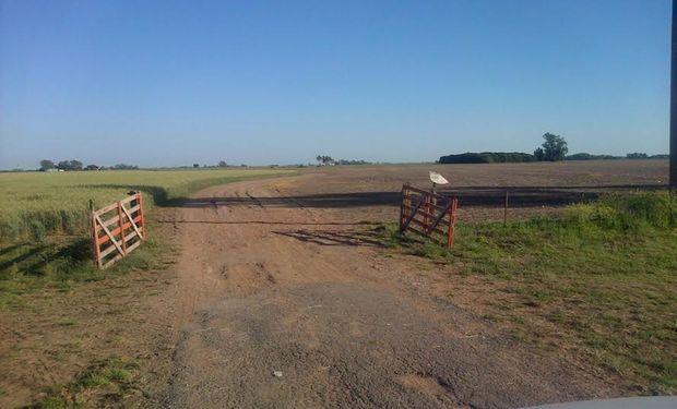 El área agronómica de AgroActiva por su parte ha dado inicio a la campaña 2014-2015 que sigue los tiempos de siembra y cosecha similares a los de cualquier planteo agrícola de la Pampa Húmeda.