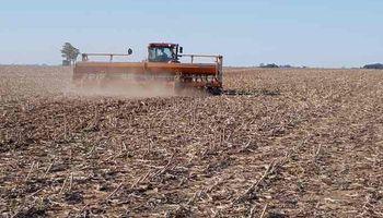 Soja y maíz: anticipan un mayor ritmo de siembra luego de la mejora en la oferta hídrica
