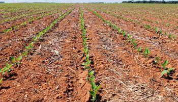 Soja en Brasil: pese al lento ritmo de siembra, se esperan más de 120 millones de toneladas