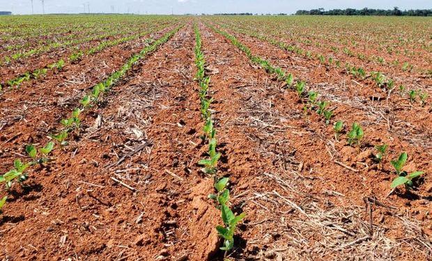 Avanza la siembra de soja en Brasil.