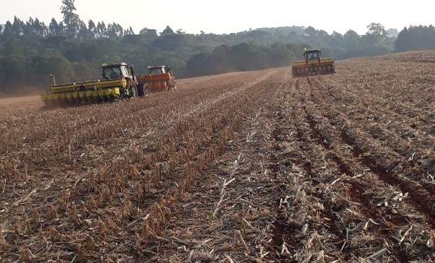 ¿Factor bajista para la soja? El atraso de la siembra en Brasil no afecta por ahora la previsión de cosecha