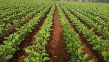 La siembra de soja en Brasil ingresa en la recta final y explican por qué se mantiene la estimación de cosecha récord