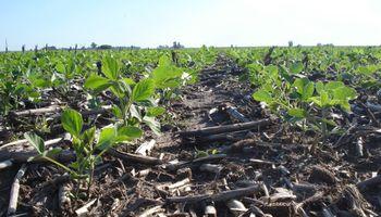 Brasil: importante demora en la siembra de soja