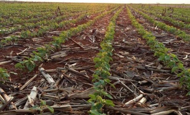 Soja 2015/16 en Sapezal (Mato Grosso). Fuente: Noticias Agricolas