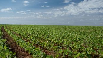 Proyectan más soja en Brasil