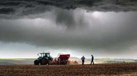 Soja, trigo y maíz: los datos del USDA que impactan al mercado de granos