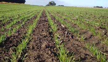 Se pone en marcha la siembra de trigo