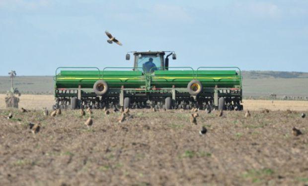 Continuó el proceso de siembra de trigo.