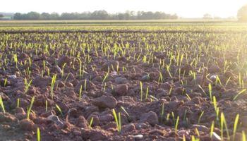 Habrá más trigo en el centro norte de Santa Fe