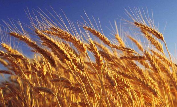 Molinos compran trigo de forma anticipada: se aseguraron 24.000 toneladas de la nueva campaña