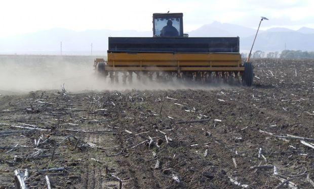 Aprovechando la buena humedad ya se sembraron 340 mil hectáreas de trigo