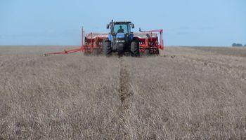 El trigo impulsó la venta de sembradoras: las perspectivas para la maquinaria no son tan sombrías
