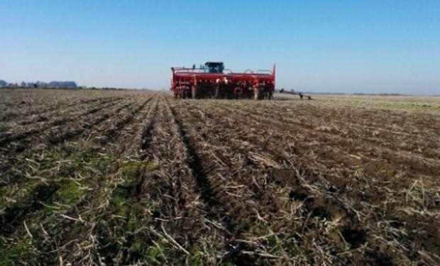 La BCR estima 4,7 millones de hectáreas con trigo. Foto Twitter: @JoseLuisTedesco