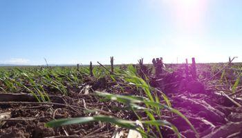 La siembra no se detiene en Santa Fe: en 12 días se completó el 58 % del área esperada de trigo