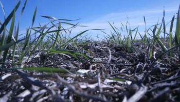 ¿Que superficie alcanzó el trigo en el centro norte de Santa Fe?