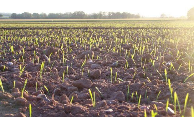 Ensayos determinaron que suelos prístinos no presentan deficiencias de Zinc.