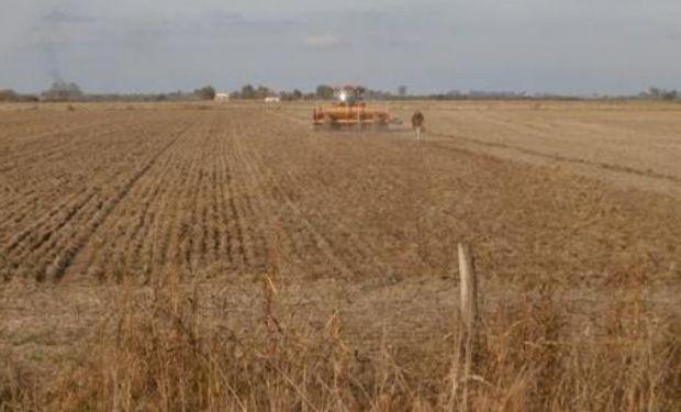 Lote de rastrojo de soja en pleno proceso de siembra de trigo, en el centro sur del departamento Las Colonias.-