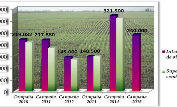 Intención de siembra (ha) hasta campaña 2013, área de estudio 10 departamentos - intención de siembra (ha) campaña 2014 - 2015, área de estudio 12 departamentos.-