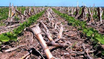 Aapresid sale a aclarar: la Siembra Directa ayuda a prevenir las inundaciones