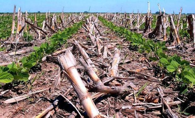 La Siembra Directa ayuda a prevenir las inundaciones.