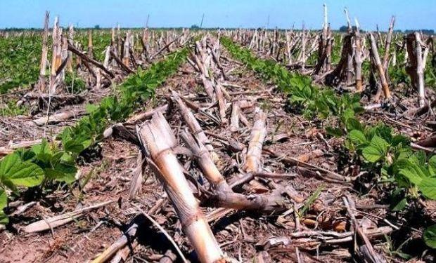 En Aapresid se desarrolló el simposio sobre agricultura conservadora para mitigar el cambio climático y mejorar la producción.